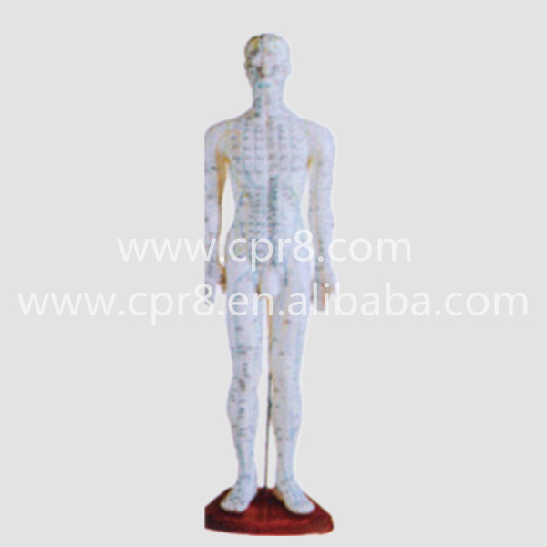 BIX-Y1006 Standard Acupuncture Model (Male) 60CM, Chinese Medicine Acupuncture And Moxibustion Manikin Model WBW290 chinese acupuncture model  acupuncture