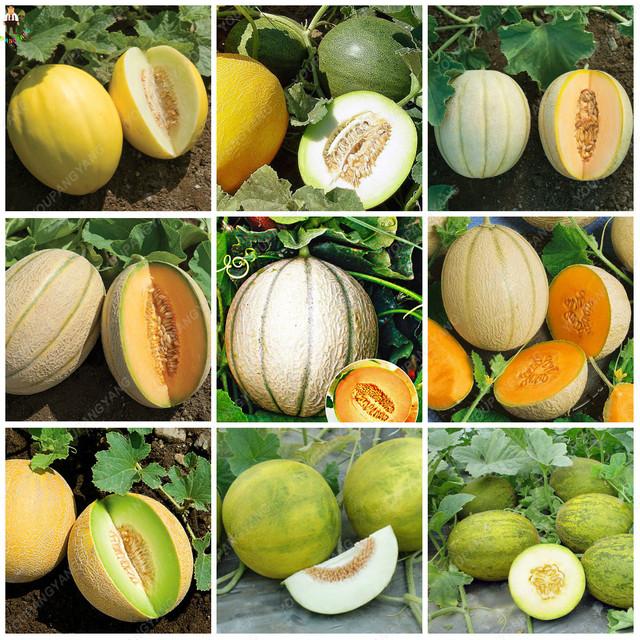 20pcs Cantaloupe Melon plantas Bonsais delicious Vegetable fruit bonsai plants  garden decoration planting Hami Melon