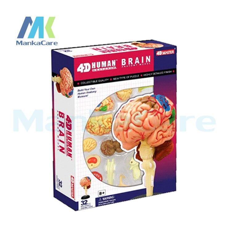 4D maestro cerebro estructura ensamblado Anatomía Humana modelo ...