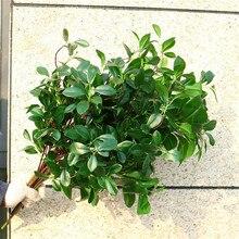 11pcs Artificial Milan Tree Braches Silk Green Murraya Stems Greenery Plant for Decorative
