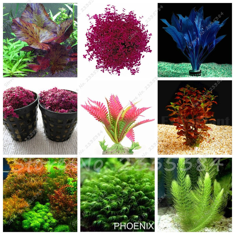 Online buy wholesale aquarium plants cheap from china for Cheap pond plants