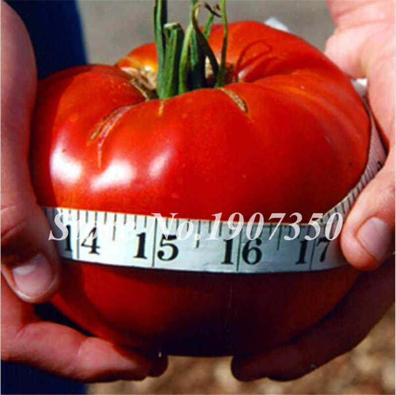 بيع كبيرة! حار 100 قطع كبيرة لحوم البقر الهجين الطماطم بونساي خارج كبيرة ، خارج لحمي ، خارج لذيذ العضوية الفاكهة والخضار بونساي النبات