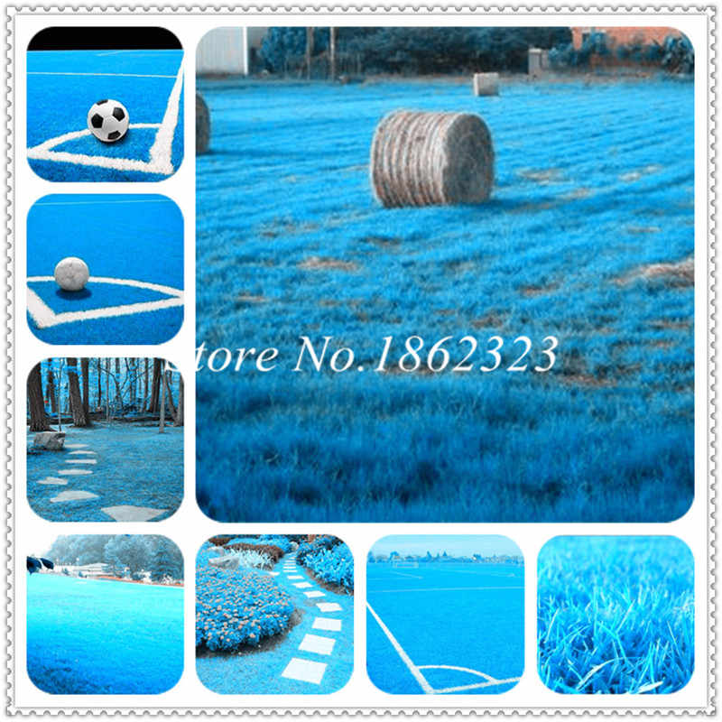 200 pcs Blue Ornamental Grass Lawn Bonsai Evergreen Lawn flower weed plants outdoor plant for home garden, the Budding Rate 98%