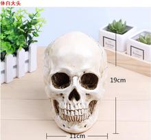 wholesale 19*11cm Mini skull mode head mannequin, resin skull, medical art, copying, drawing, sculpture, and ghost. M01008