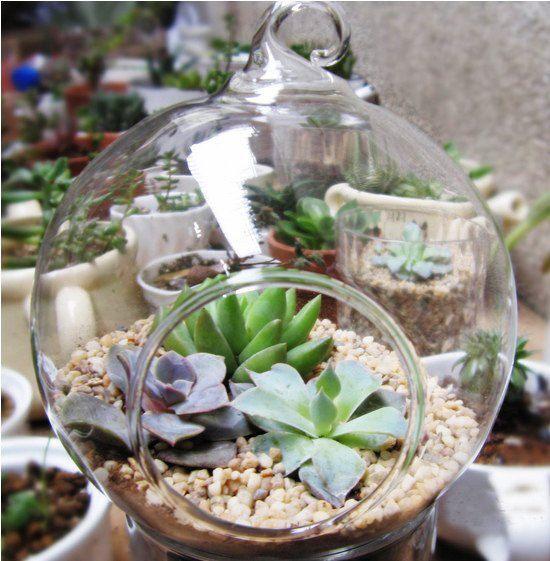 6pcs Lot Pastoral Style Succulent Moss Indoor Planter Hanging Glass