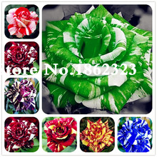 100 pcs/bag rose tiger striped rare bonsai flower plants rainbow green blue black petals plant for home garden