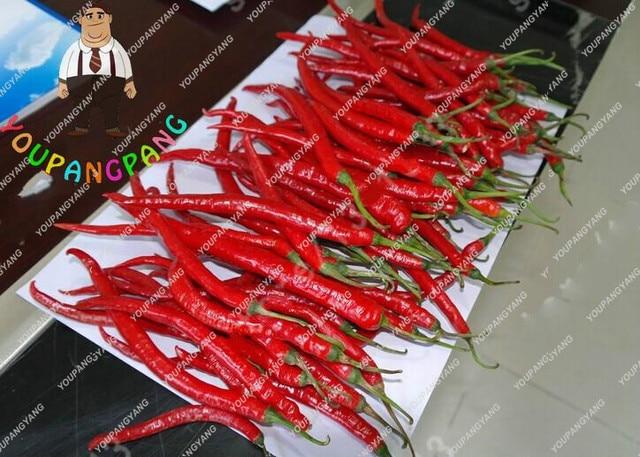 Grande Promozione 100 pz/borsa Lungo Peperoncino bonsai Rosso Peperoncino Piante di Frutta E Verdura bonsai Per Il Giardino Bonsai Semente