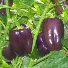 Hot Rare Purple Lantern Pepper Vegetable Paprika DIY Home Garden Seasons Chili Plant Terrace Potted Bonsai 120 PCS
