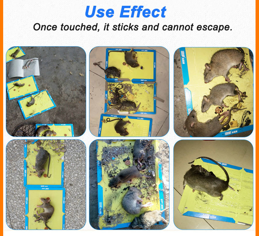 21x30CM Non Toxic Mouse Trap with Strong Glue to Stick Rats and Insects for Pest Control 12