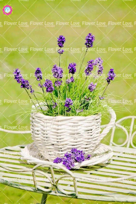 200 pcs Francês Provence Lavanda Perfumado de Lavanda Orgânica Plantio de Plantas Bonsai Flor Para Casa Jardim vasos de plantas