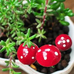100pcs cute resin crafts decorations miniature dot mushrooms red fairy gnome terrarium christmas xmas party garden.jpg 250x250