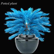 Buy Flowering Trees India And Get Free Shipping On Aliexpress Com