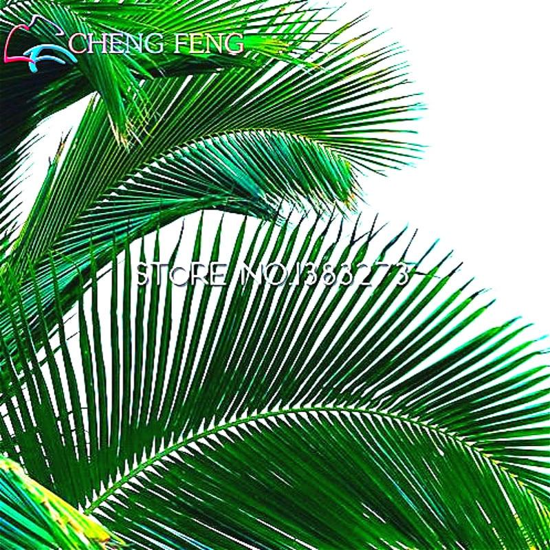 online kaufen gro handel madagaskar pflanzen aus china madagaskar pflanzen gro h ndler. Black Bedroom Furniture Sets. Home Design Ideas