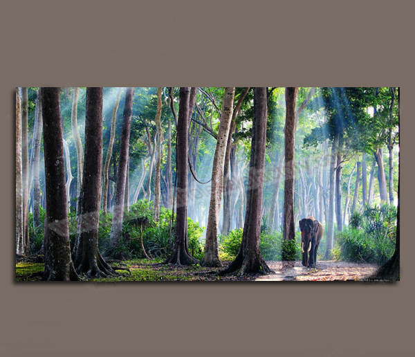Large Home Decor Canvas Modern Forest Elephant Wall Art