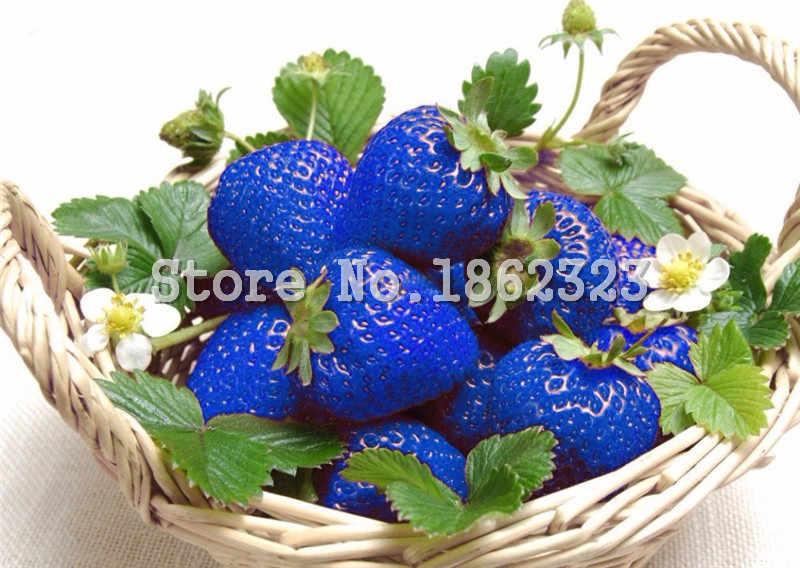 200 قطعة نادر الأزرق الفراولة بونساي في الهواء الطلق الفراولة شجرة متعددة اللون العضوية الفاكهة النباتات بونساي غرس الرئيسية حديقة