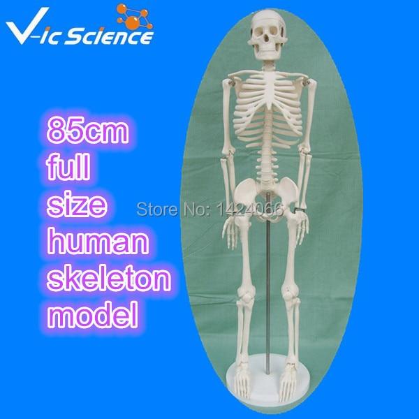 Direct factory 85cm full size human skeleton model plastic standing human skeleton life size for horror hunted house halloween decoration
