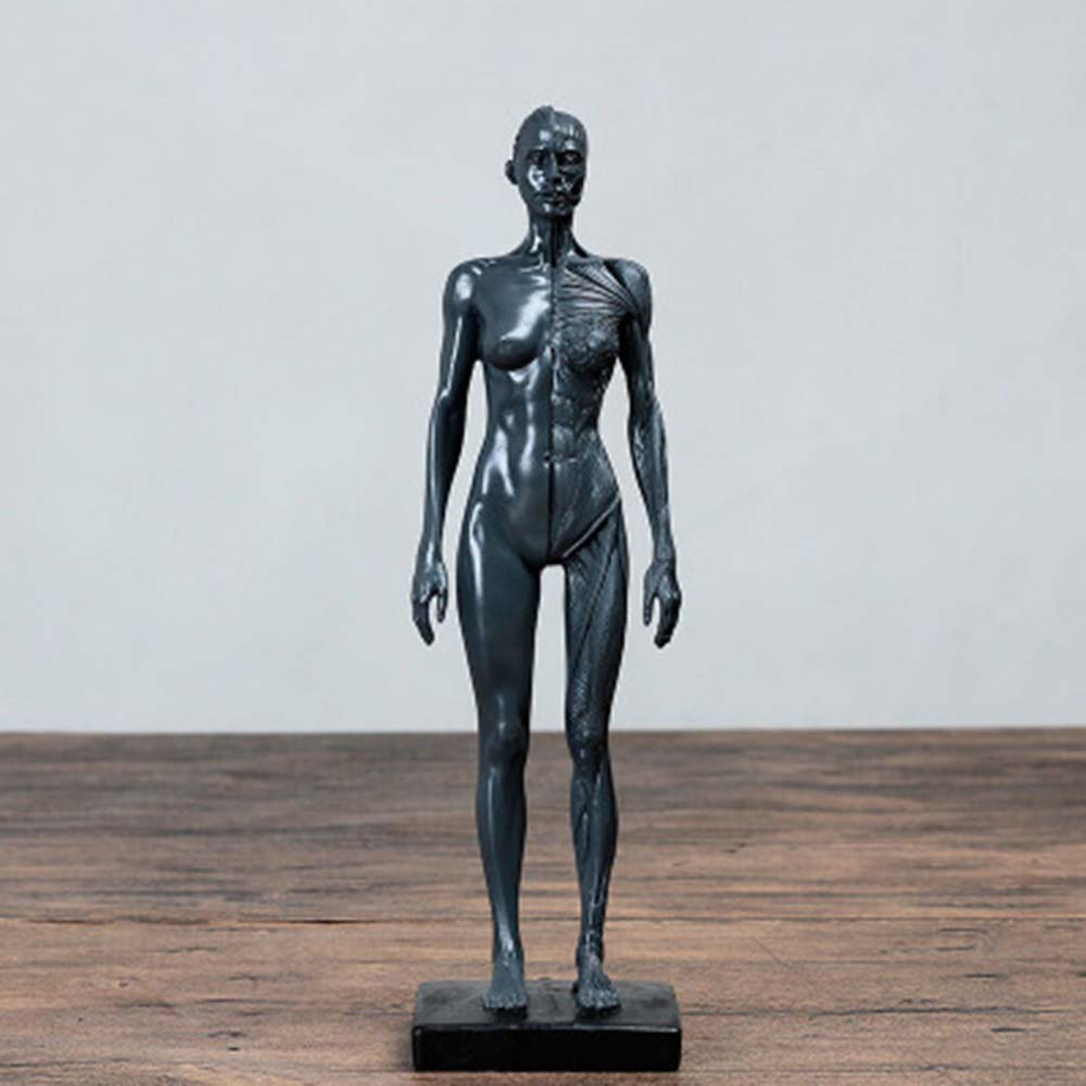 Natural Resin 30cm Human Female Artwork Model Medical Muscle Anatomical/Anatomy Structure Model Artist Drawing White Gray Gold