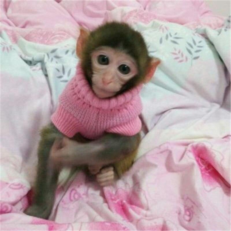 Susse Pullover Fur Hund Katze Affe Tier Warme Haustier Kleidung