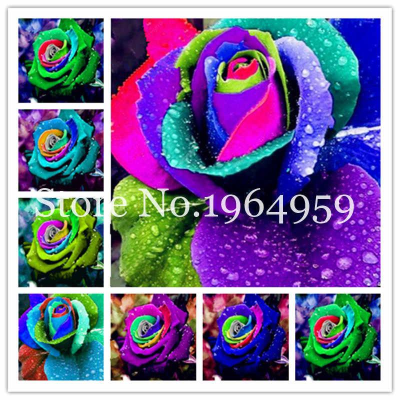 Il trasporto Libero 200 pz Rare Holland Arcobaleno Fiore della Rosa Lover Multi-Color Casa Giardino Rare Arcobaleno Rose Fiore Pianta facile da Coltivare