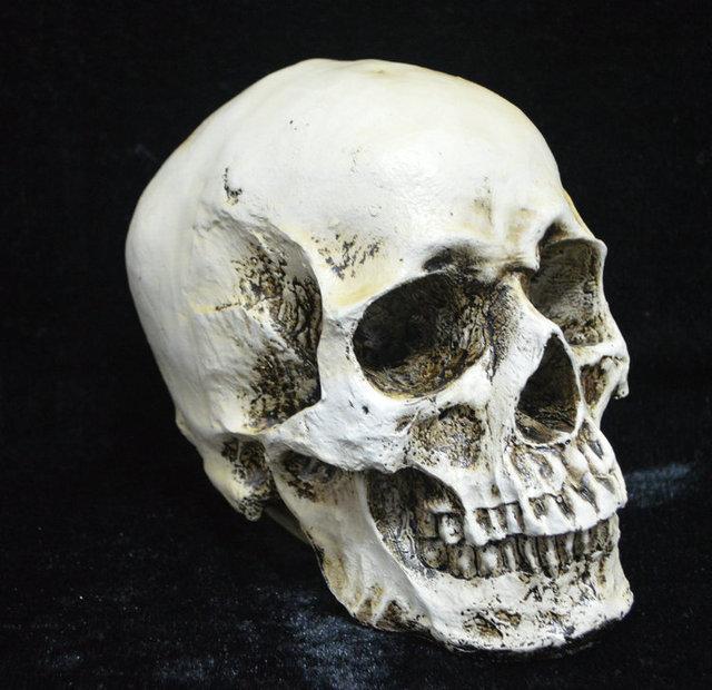 Party Decoration Halloween skull model supplies wholesale 1: 1 Medical skull human party bar KTV