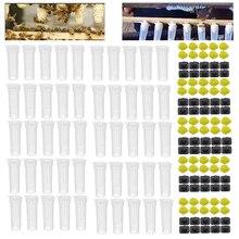 50PCS דבורת מלכת כלובי פלסטיק מגן כיסוי סלולרי כלוב תיבת כוס גידול חדש דבורים מלך כלים כוורן גידול דבורים סט ספקי