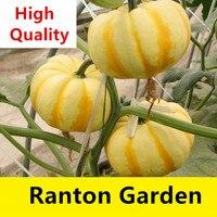 Yellow Mini Beibei Japan Pumpkin Seeds 5pcs Vegetable Seeds Mature Pumpkin will be 400G