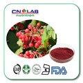 4 sacos/lote Fonte Da Fábrica-Cranberry Extrair/Extrato da Airela Proanthocyanidins/Extrato de Cranberry Cápsulas de 500 mg * 100 pcs