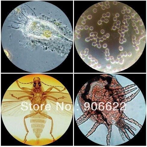 200 anatomía patología microscopio biología preparaciones ...