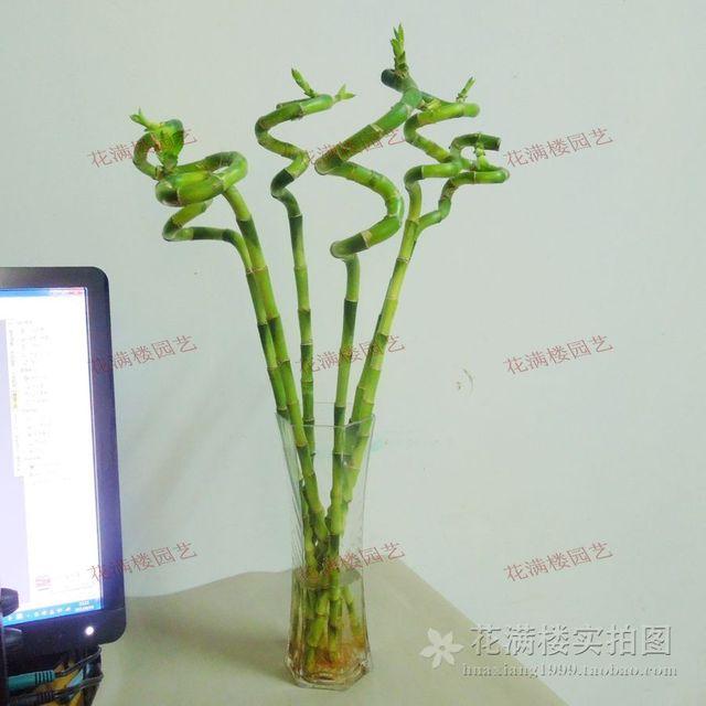 bambou interieur simple suprieur deco bambou interieur bambou en pot et lucky bambou entretien. Black Bedroom Furniture Sets. Home Design Ideas