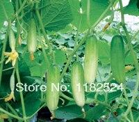 Hybrid Cucumber Micro C 306 Cucumber Seeds Fruit Vegetables Seeds (30 SEEDS)