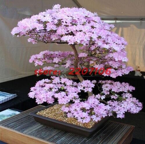 Растения, на которых растут фрукты - Бугага 21