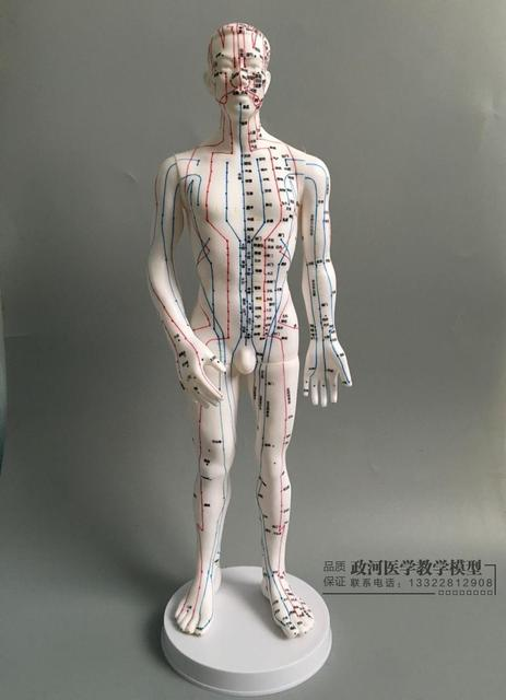 Human Body Acupuncture Model Male Meridians Model Chart Book Base 50cm