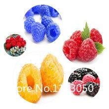 Sale! Free Shipping 200pcs 10 kinds Bonsai raspberry Seeds 100% Genuine Organic Blooming Fruit Seeds Garden Plant