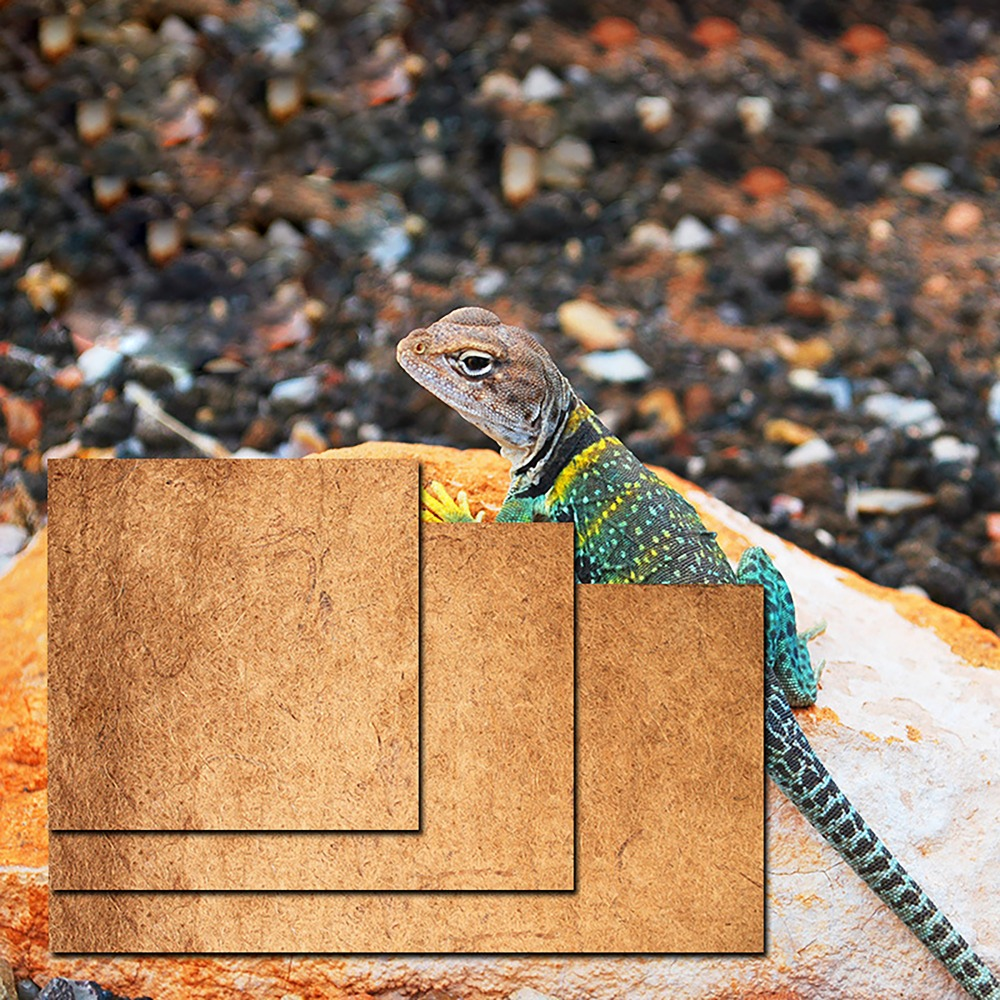 Rainforest reptile font b pet b font snake frog lizard box bottom coco carpet tortoise bird