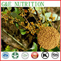 1000g Loranthus parasiticus/Chinês Taxillus Twig Extract com frete grátis