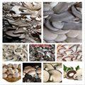100/bag vários misturado cogumelos comestíveis, sementes de hortaliças