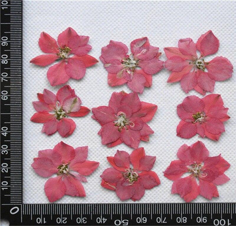 1000 sztuk na worek oryginalny różowy Larkspur boże narodzenie kwiaty dekoracje sprasowane kwiaty sztuki darmowa wysyłka w Sztuczne i zasuszone kwiaty od Dom i ogród na  Grupa 1