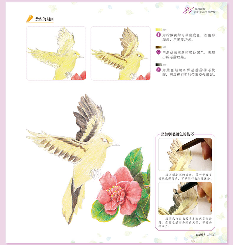 Base Da Flor Do Pássaro Mão-pintado Crianças Adulto Coloração livro