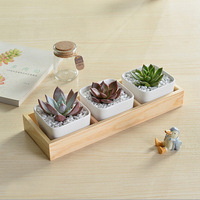 Modern minimalist white creative ceramic wooden box set Succulent Plant Container Green Planter Small Bonsai Pots Home Decor