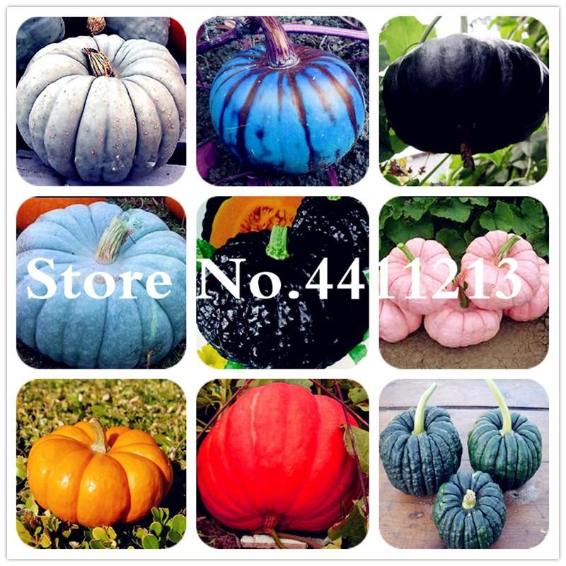 10 Pcs Giant Pumpkin Plants Vegetable Fruit Bonsai Happy Farm For Home Garden Plants Bonsai Exotic Interested Gift Free Shipping