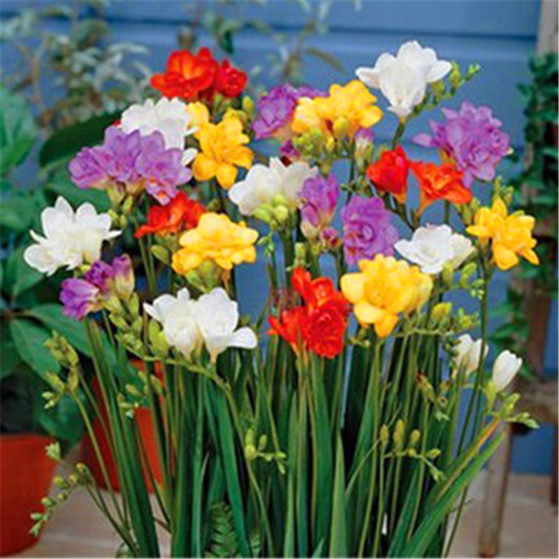 Popular Fragrant Flower Plants Buy Cheap Fragrant Flower