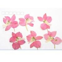 2017 Larkspur Pink Color Dried Flower Art Gem Necklace Raw Material For DIY Handicraft 120 Pcs