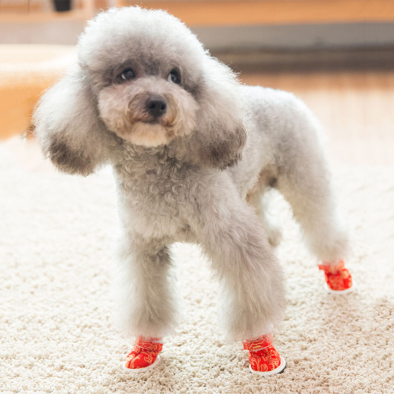 Hipidog Pet Dog Golden Silk Tang Shoes Yorkie Dog Shoes For Small