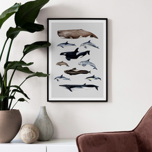 Shark Whale Dolphin Marine life Nordic Canvas Posters And Prints Wall Art Print Canvas Painting Wall Pictures For Living Room