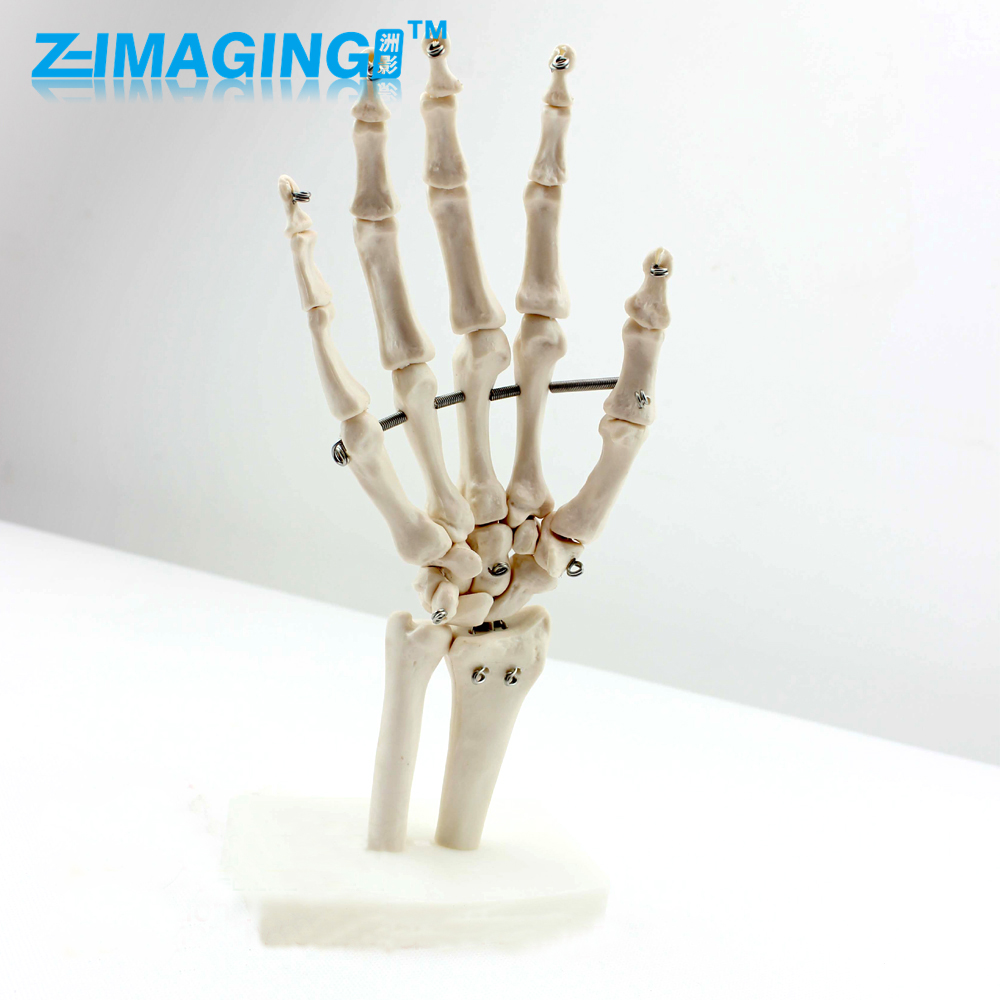 Human hand joint model human skeleton hand bone plastic standing human skeleton life size for horror hunted house halloween decoration