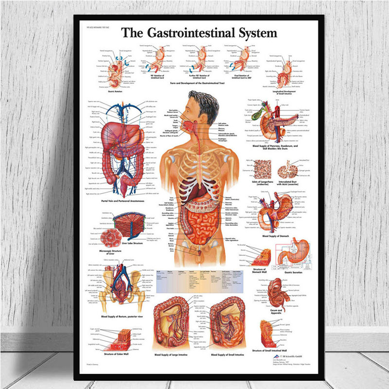 Anatomical Chart Human Body Anatomy Medical Chart Health Poster And Prints Painting Art Wall Pictures For Living Room Home Decor Buy At The Price Of 4 27 In Aliexpress Com Imall Com