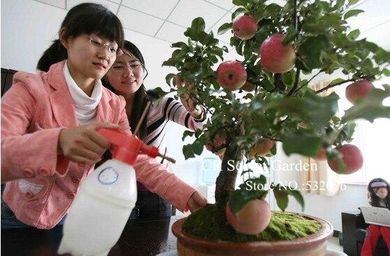 яблоки купить в Китае