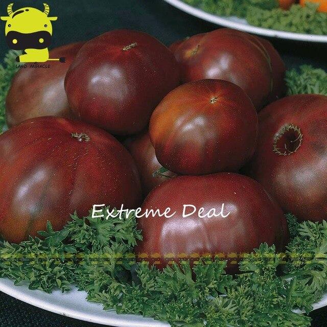 Russian black prince heirloom vegetable tomato seeds 100 seeds russian black prince heirloom vegetable tomato seeds 100 seeds delicious organic fruits workwithnaturefo