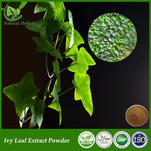 US $118 0  GMP factory supply ivy leaf extract powder/hedera helix extract  on Aliexpress com   Alibaba Group