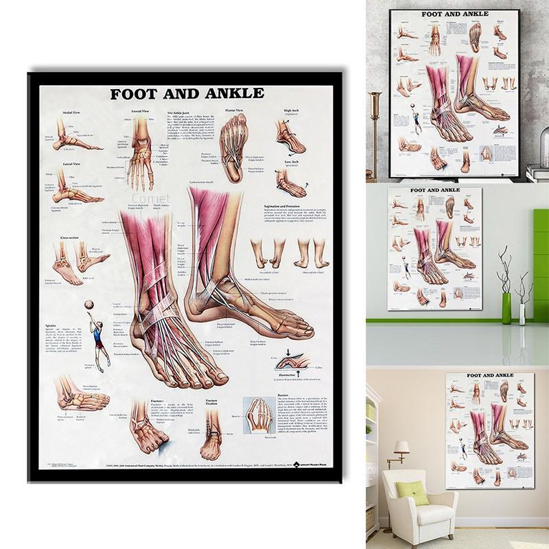 Corpo humano gráfico anatomia do pé e do tornozelo cartaz gráfico anatômico corpo humano educacional para anatomia humana cartazes